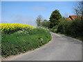 TG3726 : Oilseed rape by Oldbarn Farm by Evelyn Simak