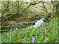 SX1284 : Stream in the woodland beside Tyland Road by Rod Allday