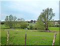 TL1514 : Meadows beside the River Lea by Des Blenkinsopp
