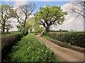 ST1641 : Lane to Dyche by Derek Harper