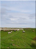 NU0545 : Flood Embankment At Goswick by James T M Towill