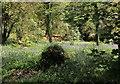SX6960 : Bluebells above the Avon by Derek Harper