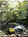 SX6961 : River Avon at Penstave Copse by Derek Harper