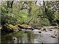 SX6961 : River Avon near Lutton by Derek Harper