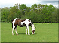TG2726 : Pasture by Old Manor Farm by Evelyn Simak