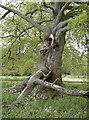 ST6390 : Tree in limbo by Neil Owen