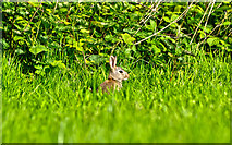 SP2865 : Warwick : Priory Park - Rabbit by Lewis Clarke