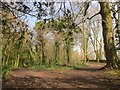 ST5477 : Paths near Kings Weston House by Derek Harper