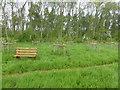 TF0820 : The Community Orchard by Bob Harvey
