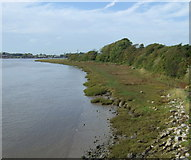 SD3641 : River Wyre bank by JThomas