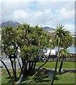 NR5267 : Jura - Palm trees and mountains by Rob Farrow