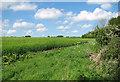TF9829 : Barley crop field by Meadowcote by Evelyn Simak