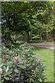 TL4300 : Rhododendron, Warren Plantation, near Copped Hall, Essex by Christine Matthews