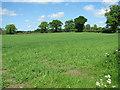 TF9927 : Wheat crop by Woodlands Farm by Evelyn Simak
