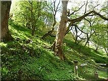 SD9726 : Woodland, south side, Rawden Mill Lock, Rochdale Canal by Christine Johnstone