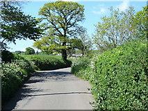 ST0106 : Cullompton: Colebrooke Lane by Martin Bodman