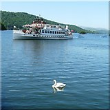 SD4096 : Two Swans at Bowness by Gerald England