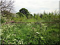 SJ4246 : Overgrown Gateway and Path by Jeff Buck