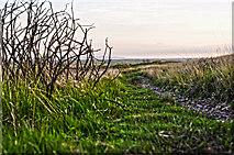 SS8429 : North Devon : Exmoor : Moorland Path by Lewis Clarke