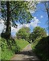 SX3466 : Byway from Newton Ferrers by Derek Harper