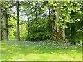 NT2838 : Kailzie Gardens by Richard Webb