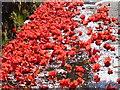 NN0420 : Flower carpet at Portsonachan by sylvia duckworth