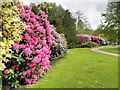 SJ7481 : Rhododendrons in Charlotte's Garden, Tatton Park by David Dixon
