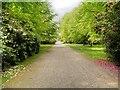 SJ7481 : The Broad Walk by David Dixon