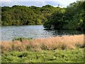 SJ7579 : Tatton Mere by David Dixon