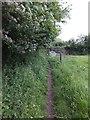SY0083 : Part of East Devon Way  by David Smith