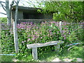 TQ8916 : Old pillbox surrounded by red campion by Marathon