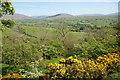 SD6692 : Spring foliage in Settlebeck Gill by Bill Boaden