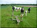 TQ1760 : Shire horses at Rushett Farm by Marathon