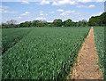 SJ7964 : Dane Valley Way by Stephen Burton