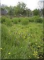 ST6416 : Marshy haven by Neil Owen