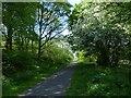 SO1103 : National Cycle Route 469, Parc Cwm Darran by Robin Drayton