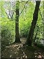 SX8079 : Trees by the Bovey by Derek Harper