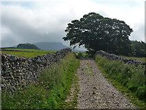 SD8172 : Pennine Way (Horton Scar Lane) by Kim Fyson