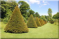 SJ3248 : Clipped Yew Cones at Erddig by Jeff Buck