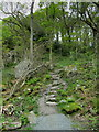 NS3895 : West Highland Way in Sallochy Forest by Chris Heaton