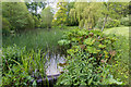 SP5241 : The Willow Pond, Thenford Arboretum by David P Howard