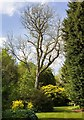 SP5241 : Birch Way, Thenford Arboretum by David P Howard