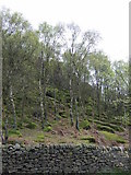 SK2773 : Stone wall and woodland by JThomas