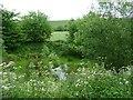 SU0153 : Russell Mill & Strawberry Hill Walk [63] by Christine Johnstone