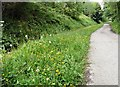 SJ9594 : Buttercups and dandelions on the Trans Pennine Trail by Gerald England