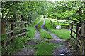 SS8521 : North Devon : Farm Track by Lewis Clarke
