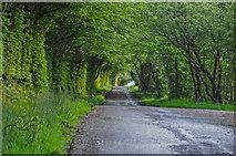 SS8521 : North Devon : Country Lane by Lewis Clarke