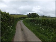 SX6296 : Corscombe Lane to Higher Corscombe by David Smith