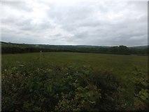 SX6396 : Field north of Restland Lane by David Smith