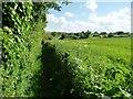 SU0255 : Easterton footpath [EAST15] heading south by Christine Johnstone